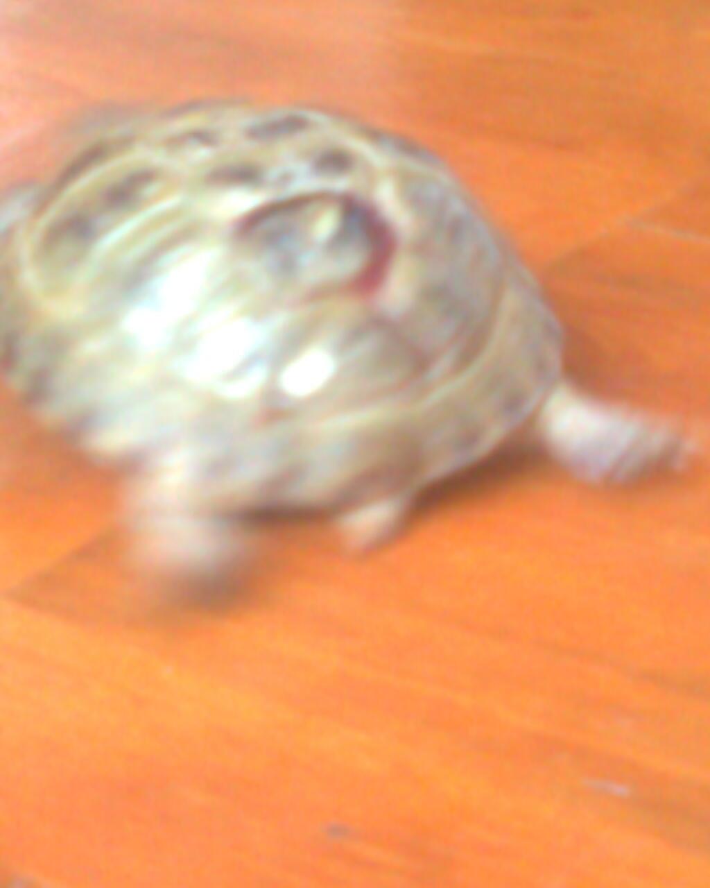 Украшения из панциря черепахи фото