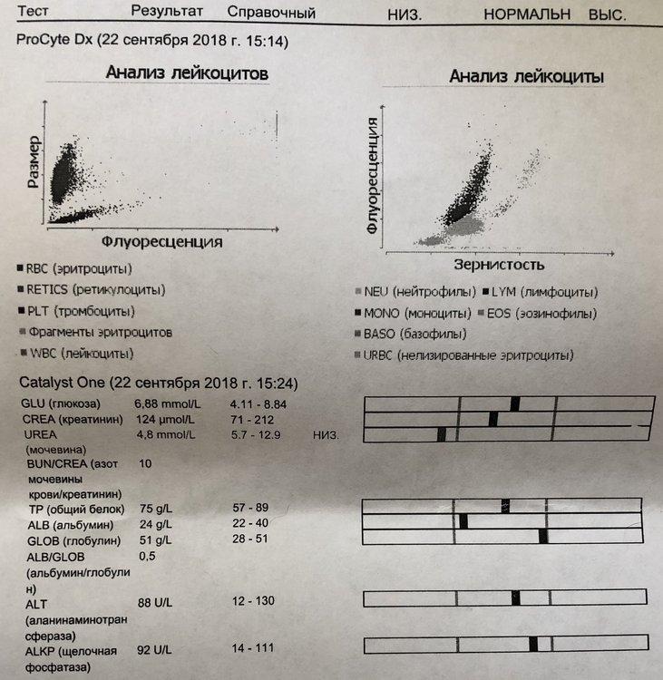 Анализ крови_1.jpeg
